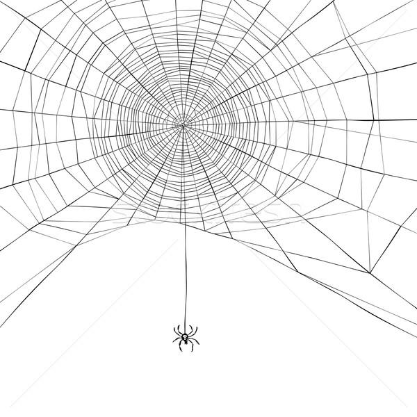 Halloween Spinnennetz Natur Design Hintergrund Web Stock foto © pashabo