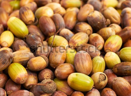 куча осень текстуры лес природы фрукты Сток-фото © pashabo