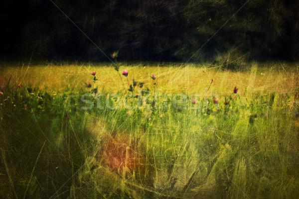 Foto d'archivio: Trifoglio · fiori · prato · vintage · shot · fiore