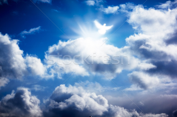 White dove in heavenly sky Stock photo © pashabo