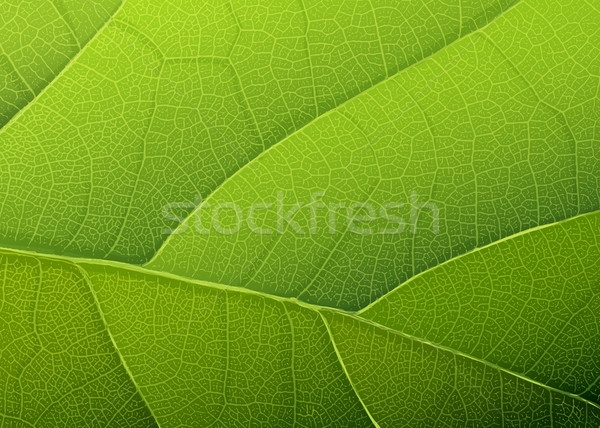 Groen blad textuur vector eps10 voorjaar abstract Stockfoto © pashabo