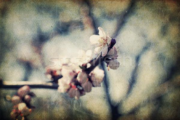 Foto d'archivio: Retro · fiori · primavera · abstract · arte