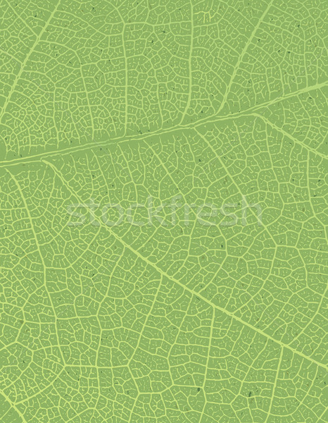Nature background with free space for text or image. Green leaf  Stock photo © pashabo