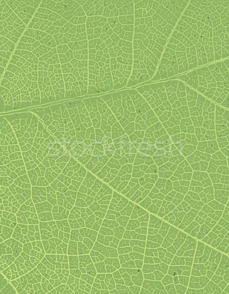 природы свободный пространстве текста изображение зеленый лист Сток-фото © pashabo