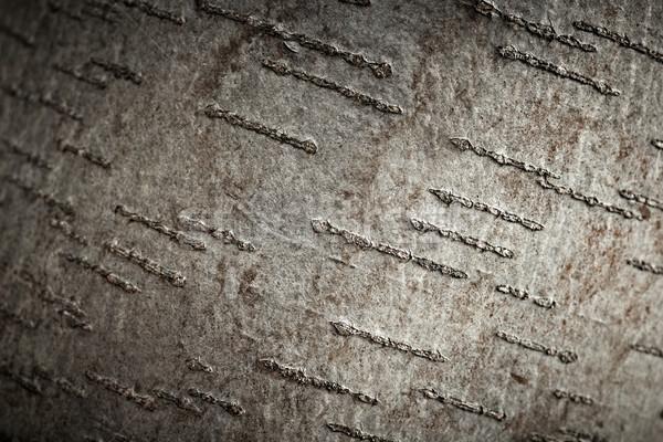Aspen tree bark texture, closeup shot. Stock photo © pashabo