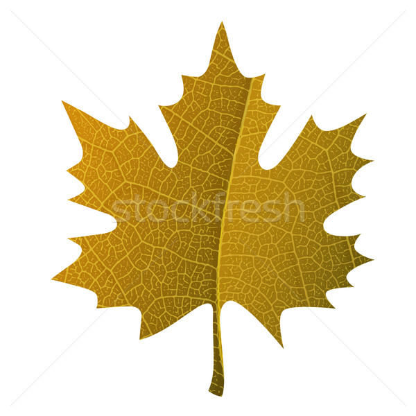 Oranje esdoornblad symbool geïsoleerd blad aderen Stockfoto © pashabo