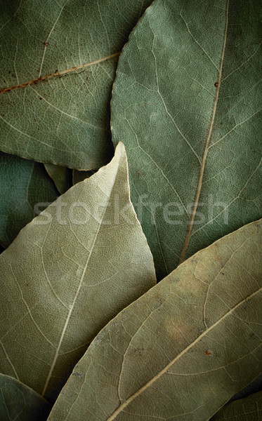 Dried laurel leaf background Stock photo © pashabo