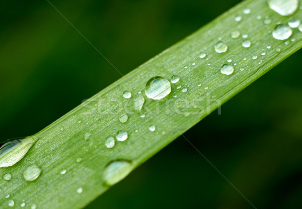 Fresh grass with dew drops Stock photo © pashabo