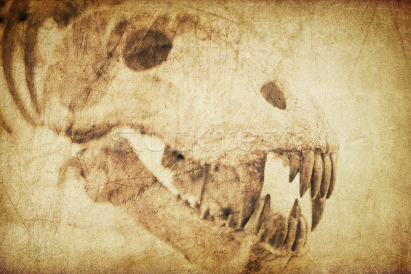 Spooky skull diabolical creatures. Vintage styled background Stock photo © pashabo
