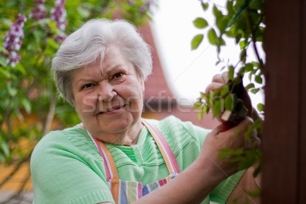 高齢者 女性 庭園 シニア カット バラ ストックフォト © Pasiphae