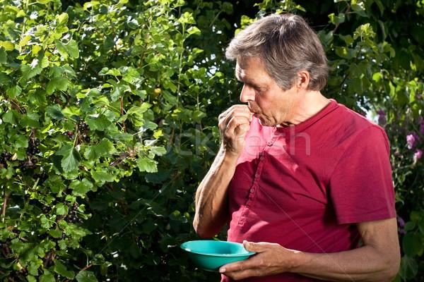 アクティブ 男 庭園 食べ 液果類 ストックフォト © Pasiphae