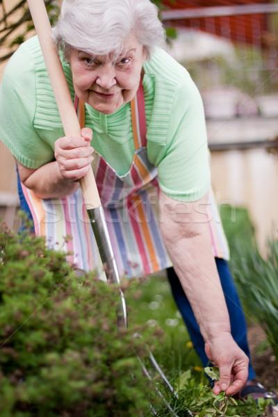 シニア 作業 庭園 女性 幸せ ストックフォト © Pasiphae