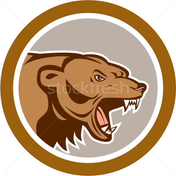 Angry Grizzly Bear Head Circle Cartoon Stock photo © patrimonio