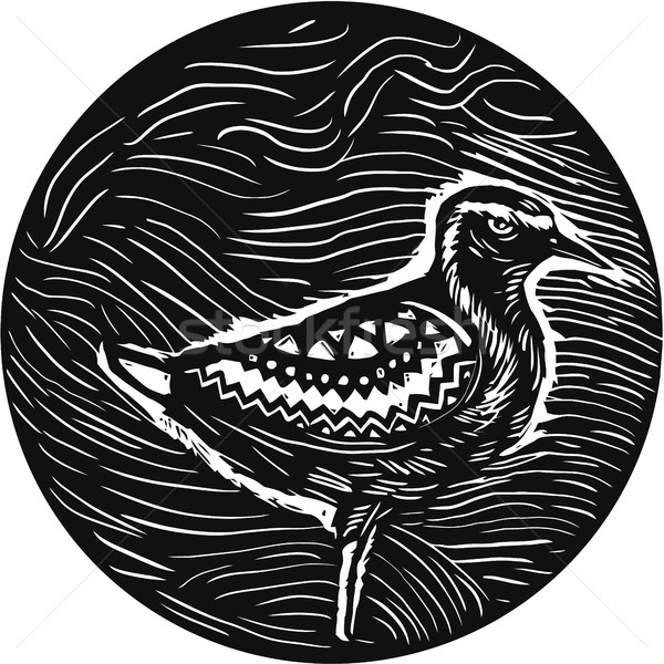 Golden Plover Standing Circle Tribal Art Stock photo © patrimonio