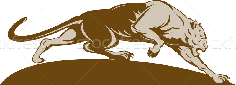 Panther иллюстрация большие кошки кошки Leopard охота Сток-фото © patrimonio
