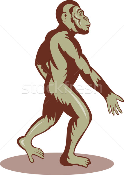 Prehistoric man walking upright Stock photo © patrimonio