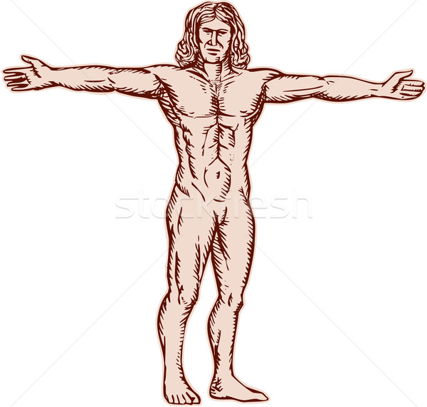 Stock photo: Vitruvian Man Arms Spread Front Etching