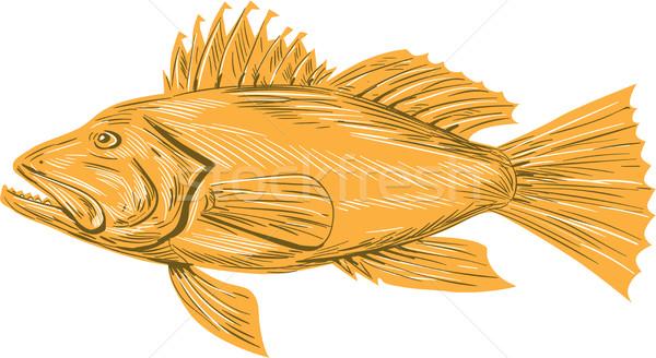 Fekete tenger basszus rajz rajz stílus Stock fotó © patrimonio