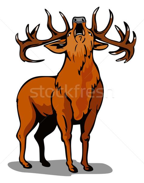 Deer Roaring Stock photo © patrimonio