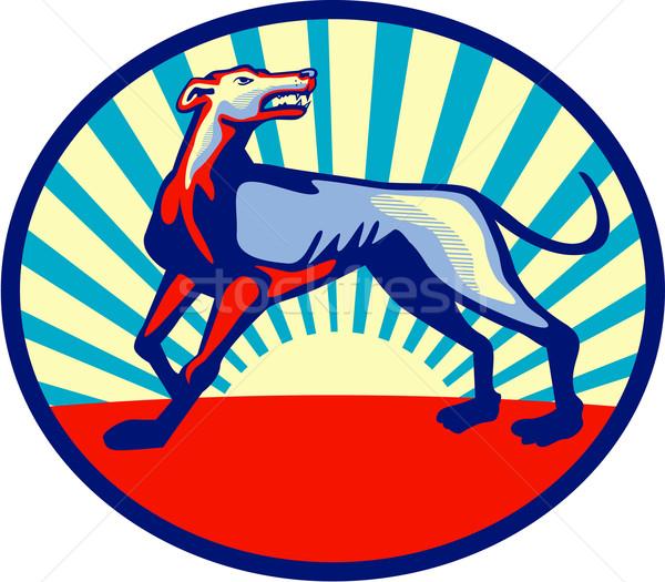 Galgo perro enojado círculo retro Foto stock © patrimonio
