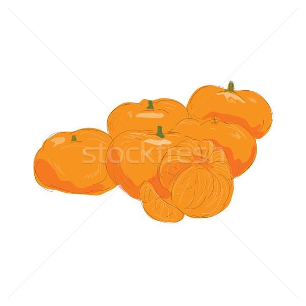Mandalina meyve soyulmuş suluboya örnek turuncu meyve Stok fotoğraf © patrimonio