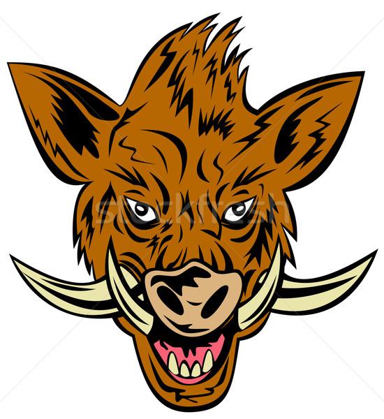 свинья кабан голову иллюстрация изолированный Сток-фото © patrimonio