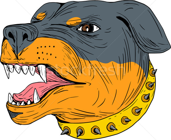 Rottweiler Guard Dog Head Aggressive Drawing Stock photo © patrimonio