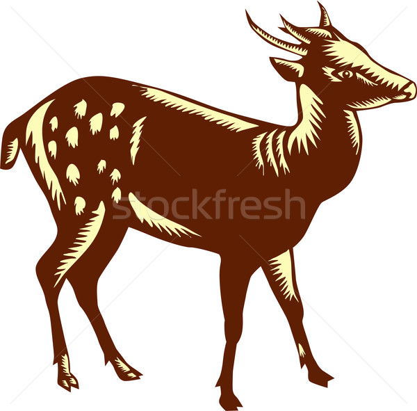 Philippine Spotted Deer Woodcut Stock photo © patrimonio