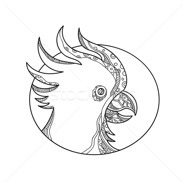 Cockatoo Head Circle Doodle Art Stock photo © patrimonio