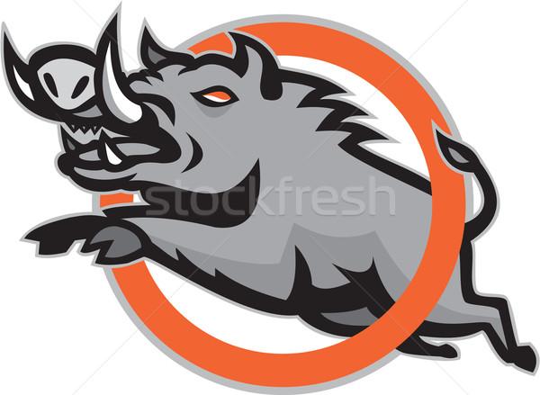 Wild Pig Boar Razorback Jumping Circle Stock photo © patrimonio