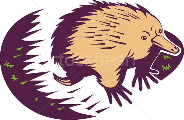 echina spiny anteater Stock photo © patrimonio