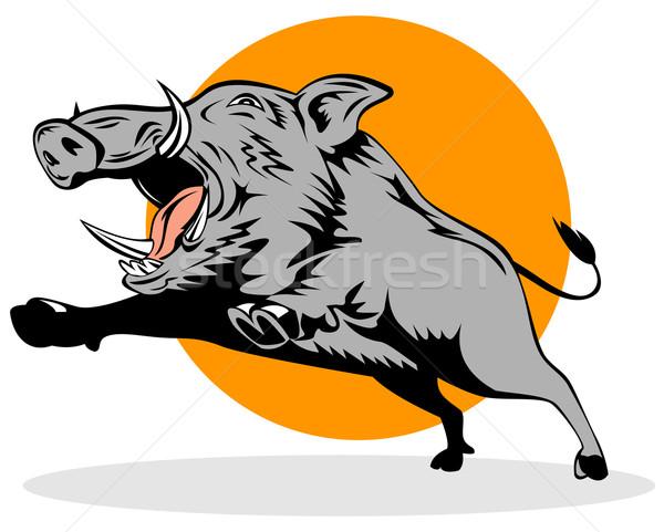 Wild Pig Boar Jumping Stock photo © patrimonio