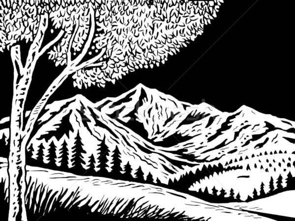 горные сцена дерево передний план иллюстрация черно белые Сток-фото © patrimonio