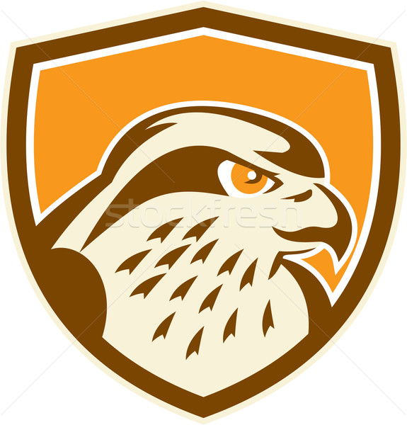 Falcão cabeça escudo retro ilustração falcão Foto stock © patrimonio