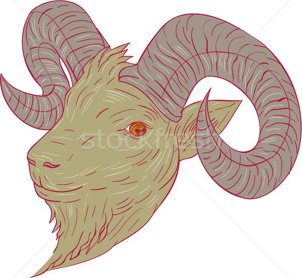 Górskich koza baran głowie rysunek szkic Zdjęcia stock © patrimonio