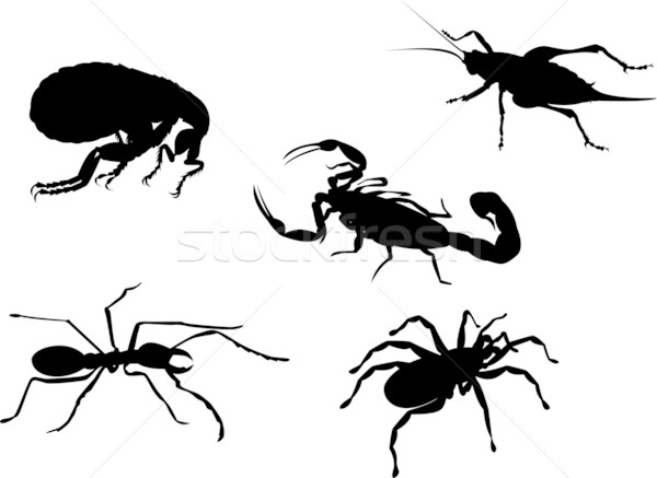 flea cricket ant spider scorpion insect  Stock photo © patrimonio