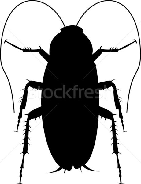 Cucaracha silueta ilustración blanco Foto stock © patrimonio