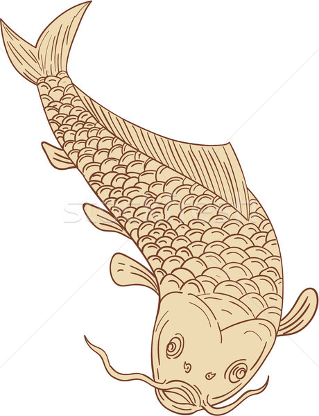 Koi Nishikigoi Carp Diving Down Drawing Stock photo © patrimonio
