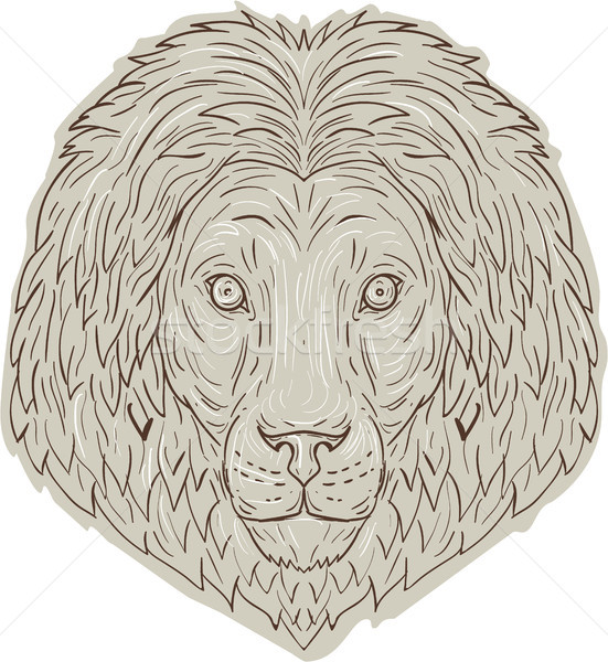 Lion Big Cat Head Mane Drawing Stock photo © patrimonio