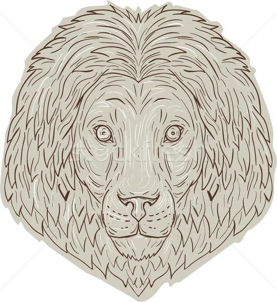 Aslan büyük kedi kafa çizim kroki stil Stok fotoğraf © patrimonio