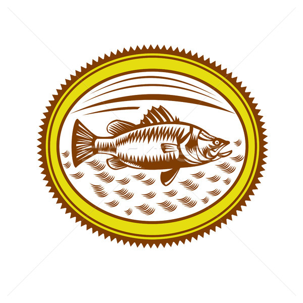 Saltwater Barramundi Rosette Woodcut Stock photo © patrimonio