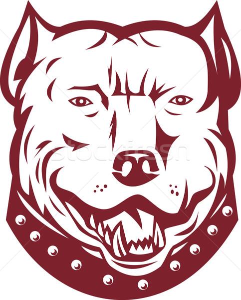 Pitbull bika terrier kutya fej elöl Stock fotó © patrimonio