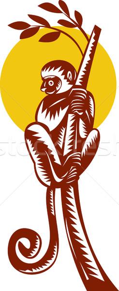 lemur climbing tree Stock photo © patrimonio