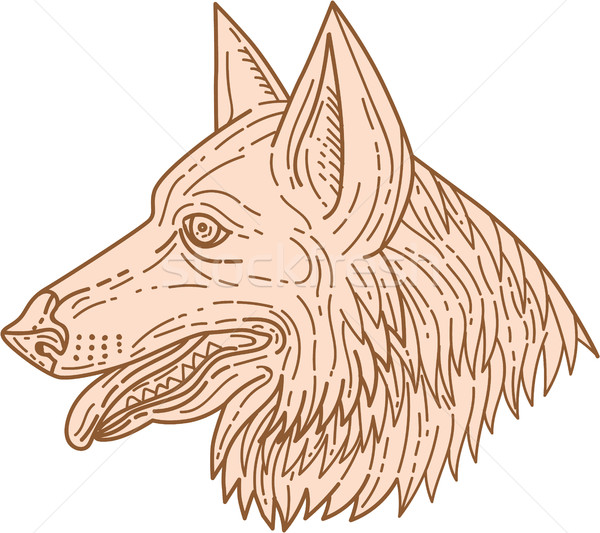 German Shepherd Dog Head Mono Line Stock photo © patrimonio