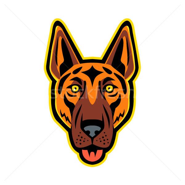 German Shepherd Dog Head Front Mascot Stock photo © patrimonio