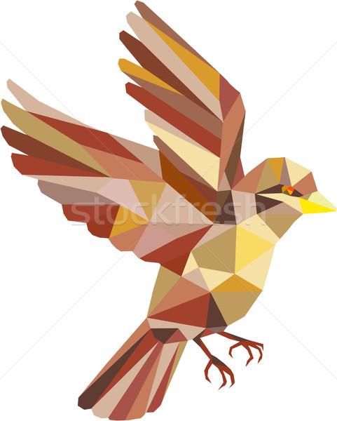 Gorrión vuelo bajo polígono estilo ilustración Foto stock © patrimonio