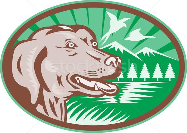 Labrador Retriever Hunting Dog Retro Stock photo © patrimonio