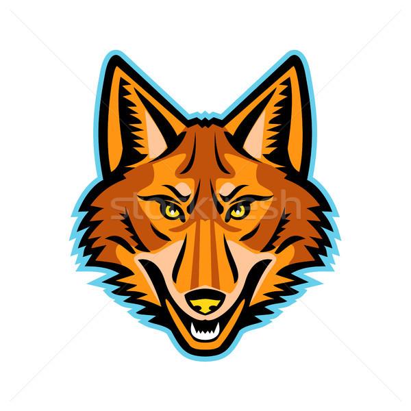 Coyote Head Front Mascot Stock photo © patrimonio