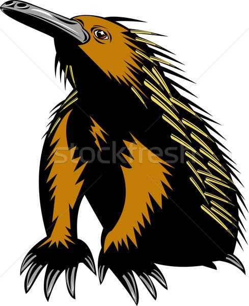 spiny anteater or echidna Stock photo © patrimonio