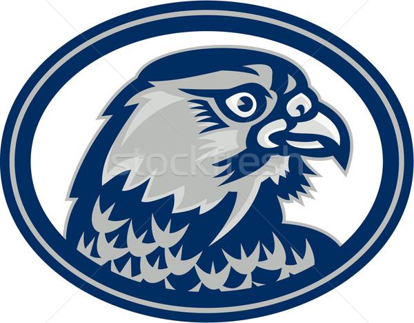 Falcon testa lato ovale retro illustrazione Foto d'archivio © patrimonio